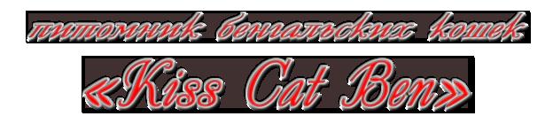 Бенгальские кошки питомник kiss cat ben